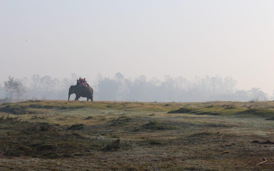 رحلتي إلى سفاري النيبال! My trip to Nepal safari!